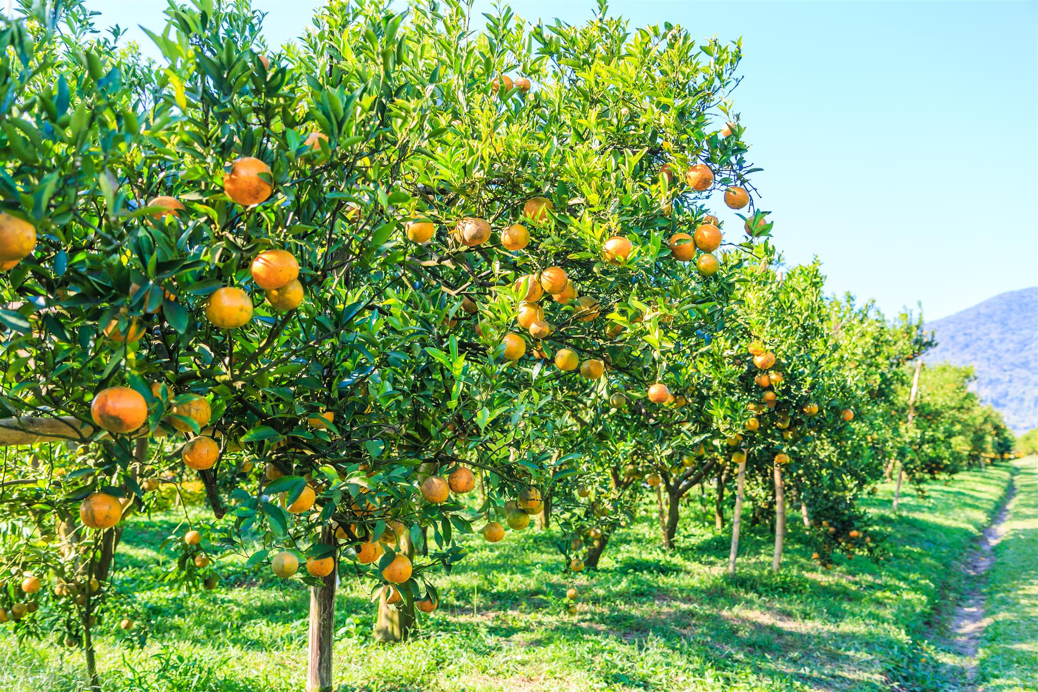 Fruticultura - enquadramento